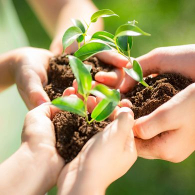 children-holding-young-plant-sq
